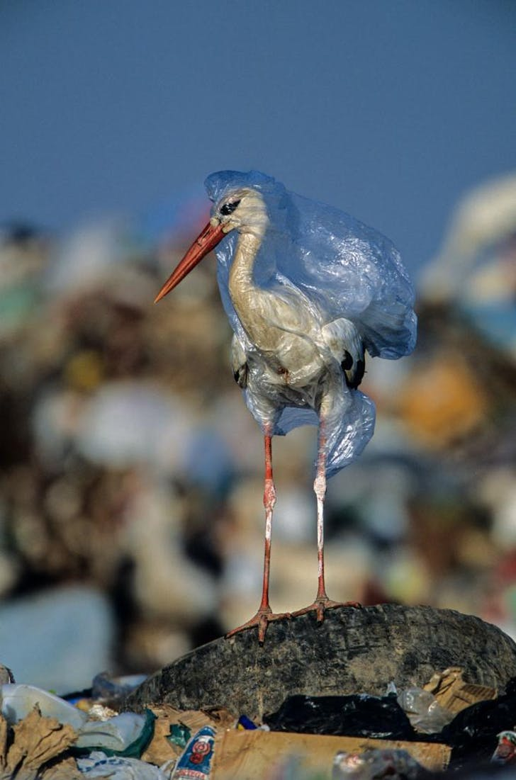 plasticbird